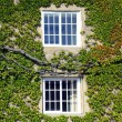 Windows among green nature - Stock Photo