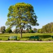 Stock Photo: Peaceful park