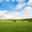 Field of wheat and perfect blue sky — Stock Photo