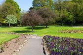 Green park in spring — Stock Photo