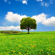 Stock Photo: Beautiful spring landscape