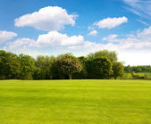 Green grass on a golf field — Stock Photo