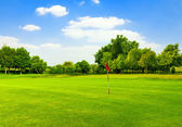 Perfect Green grass on a golf field — Stock Photo