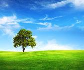 Champ, arbre et bleu ciel — Photo