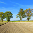 Stock Photo: Rural landscape