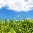 Grass over blue sky — Stock Photo