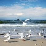 Seagulls — Stock Photo #32302375
