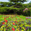 Colourful Flowerbeds in an Attractive English Formal Garden — Stock Photo