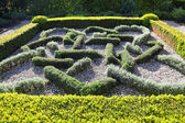Topiary Landscaping — Stock Photo