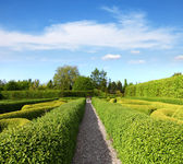 Lush Green Topiary in a Tranquil Garden — Stock Photo
