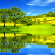 Beautiful green environment — Stock Photo