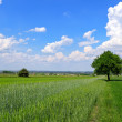 Summer rural landscape — Stock Photo #12030869