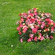 Stock Photo: Summer Flower Bed