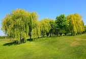 Golf alanı — Stok fotoğraf