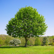 Tree in park — Stock Photo #12321993