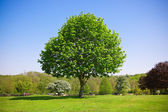 Tree in the park — Stock Photo