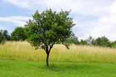 緑果樹園 — ストック写真