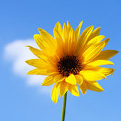 Autumn yellow flower — Stock Photo