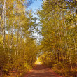 Alley in a autumn forest — Stock Photo #13509730