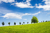 Green field against blue sky — Stock Photo
