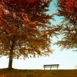 Stock Photo: Autumnal park