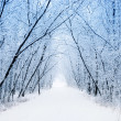 Winter — Stock Photo #13842230