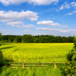 Kırsal manzara — Stok fotoğraf