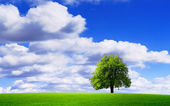 Meraviglioso ambiente naturale — Foto Stock