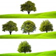 Collection of green trees - 图库照片