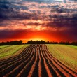 Rural landscape at sunset — Stock Photo