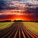 Rural landscape at sunset — Stock Photo #15832303