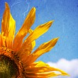 Sunny sunflower background — Stock Photo