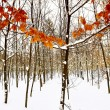 Winter trees in the snow — Stock Photo