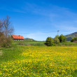 Country spring landscape — Stock Photo