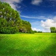 Stock Photo: Green spring field and blue sky