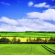 Spring green landscape — Stock Photo
