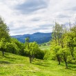 Stock Photo: Mountain apple orchards