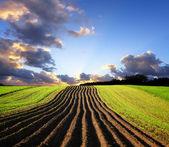 Krajina při západu slunce — Stock fotografie