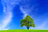 Tree on blue sky — Stock Photo