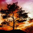 Foto Stock: Tree Sunset