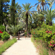 Foto de Stock  : Tropical garden