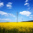 Yellow rapeseed field — Stock Photo