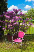 Chair and rhododendron in the garden — Stock Photo
