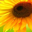 Yellow Sunflower — Stock Photo #28300625