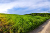 Green summer landscape — Stockfoto