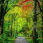 Green nature park — Stock Photo