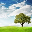 Green tree — Stock Photo #30332897
