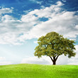 Green tree — Stockfoto #30332897