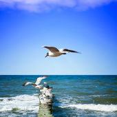 Seagulls on shore of the Sea — Stock Photo