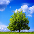 Stock Photo: Green environment